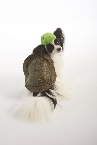 lookinu0027 good! by FASHION PET TURTLE COSTUME  sc 1 st  Ethical Pet & lookinu0027 good! by FASHION PET TURTLE COSTUME - Ethical Pet