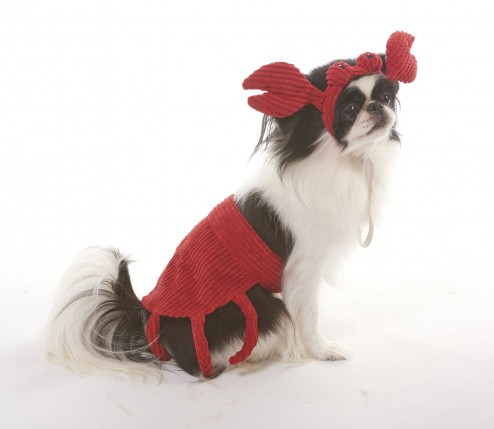 lookinu0027 good! by FASHION PET CRAB COSTUME in Extra Small/SMALL  sc 1 st  Ethical Pet & lookinu0027 good! by FASHION PET CRAB COSTUME in Extra Small/SMALL ...
